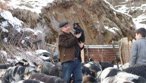 Hayvancılıkla uğraşan ailelerin zorlu kış mesaisi