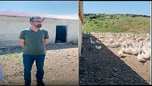 Ankara'dan Hınıs'a Kaz Çiftliği Serüveni