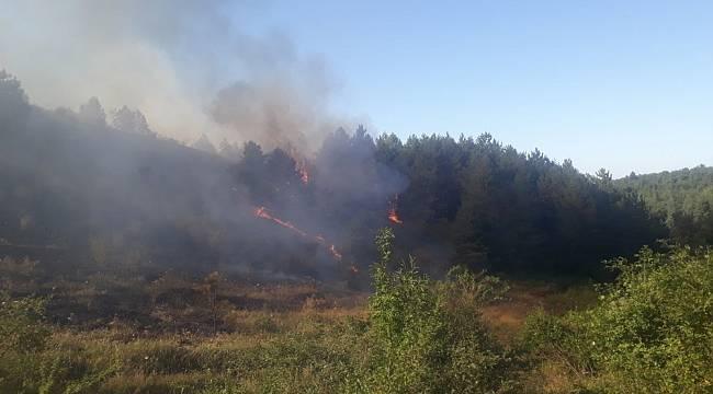 Kastamonu'da ormanlık alanda çıkan yangın rüzgar nedeniyle kontrol altına alınamıyor