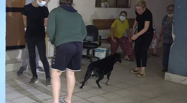 Ev yangınında dumandan etkilenen köpeği itfaiye kurtardı